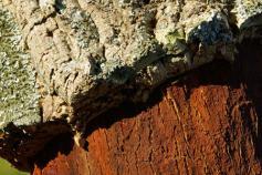 corcho sostenible