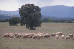 Proyecto Prácticas agrarias sostenibles en la Red Natura 2000 del Programa empleaverde