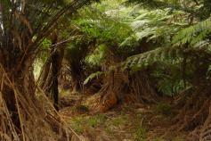 emprende-forestal