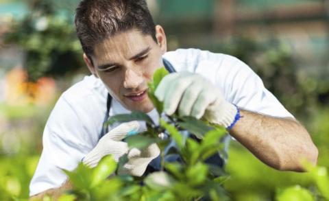 Proyecto Jovenes Jardineros Sostenibles del Programa Empleaverde de la Fundación Biodiversidad